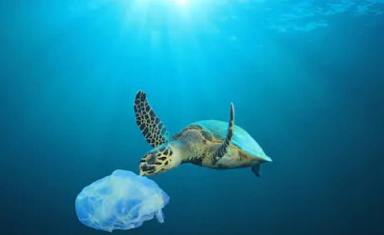プラスチックによる海洋汚染